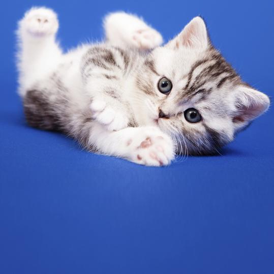 Comportamento felino é terreno fértil para estudo