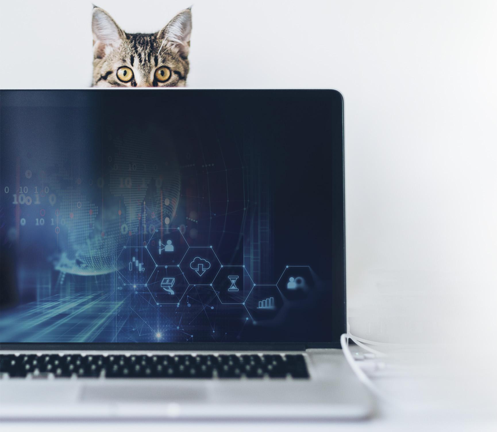 Influenciadores digitais: conheça os gatos famosos da internet