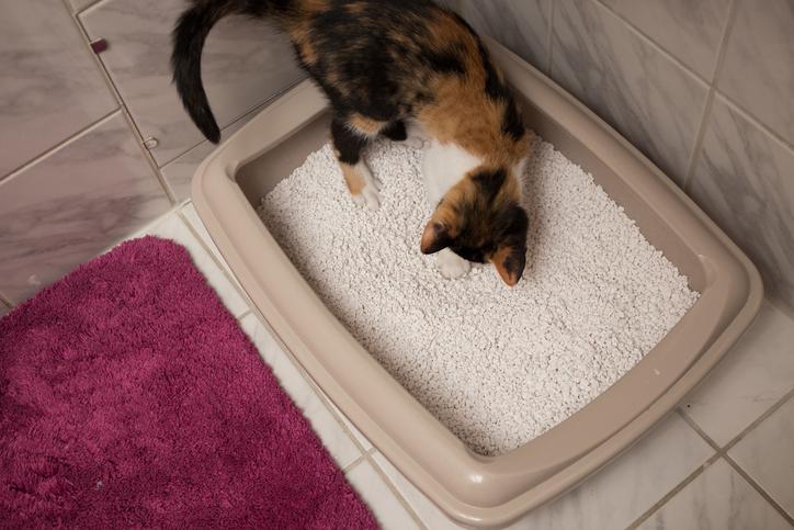 Seu gato usa a caixa de areia?