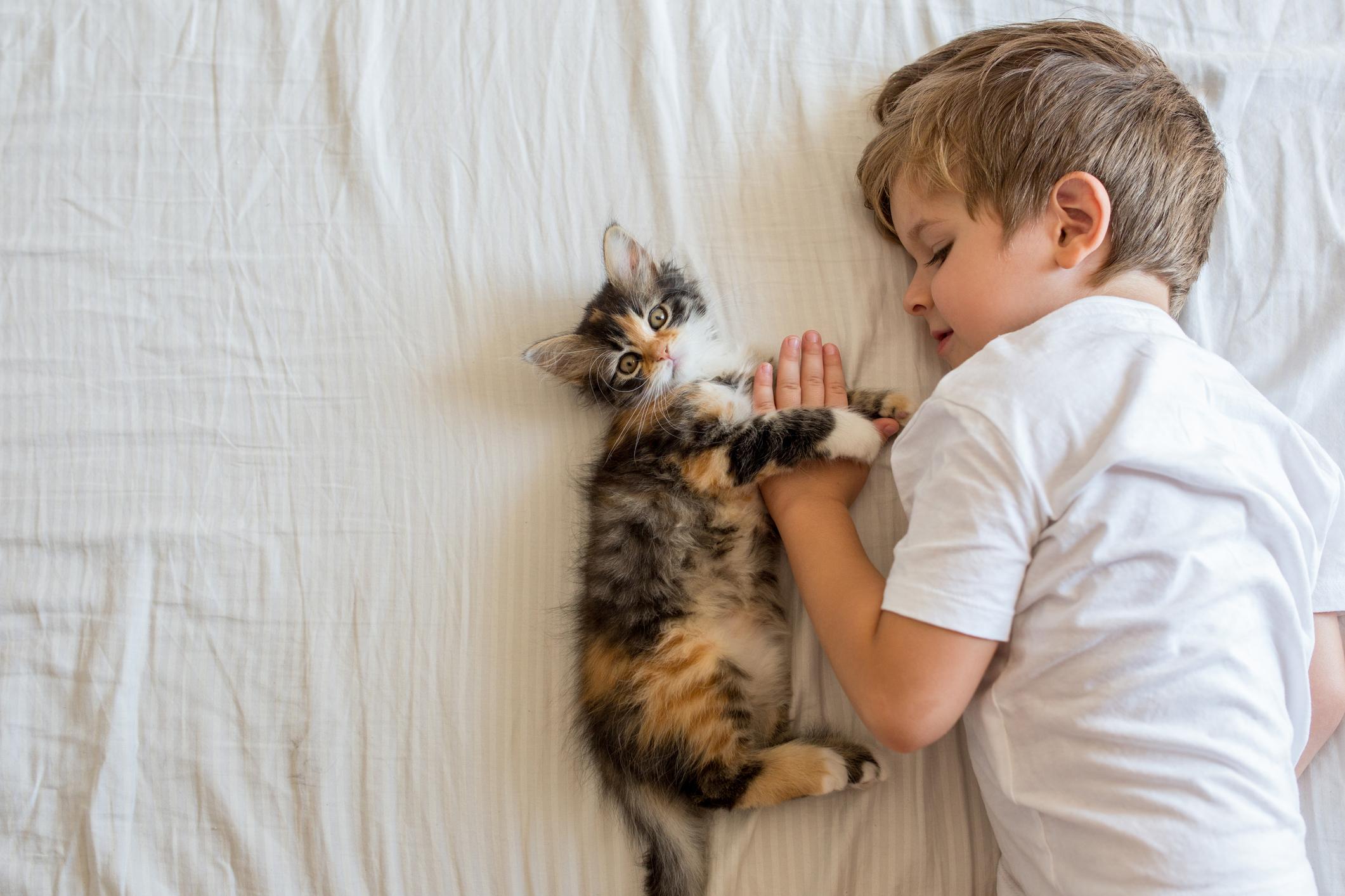 Crianças que convivem com gatos de estimação têm menos risco de ter asma