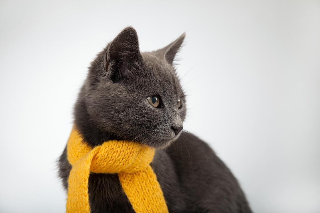 10 cuidados com os gatos para o inverno