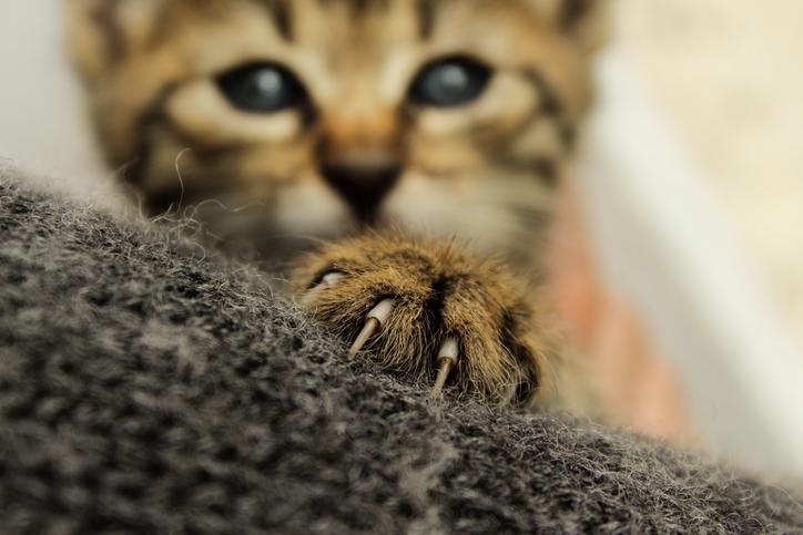 Por que arranhar é tão importante para os gatos?