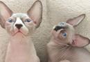 6 dicas infalíveis para adaptar um gato recém-chegado