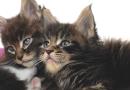Zoonoses e doenças infecciosas: o que pode ser transmitido para o homem e o pet?