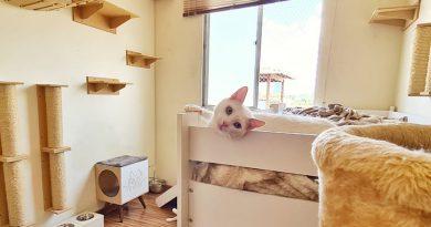 Casas gatificadas: um lar planejado para o seu gato