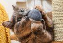 Ansiedade felina: como descobrir e tratar