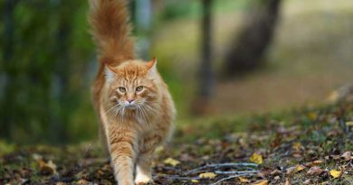 Gatos que vivem em sítios: que cuidados inspiram?