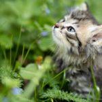 Horta para Felinos